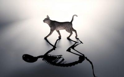 Schrodinger's Cat Explained