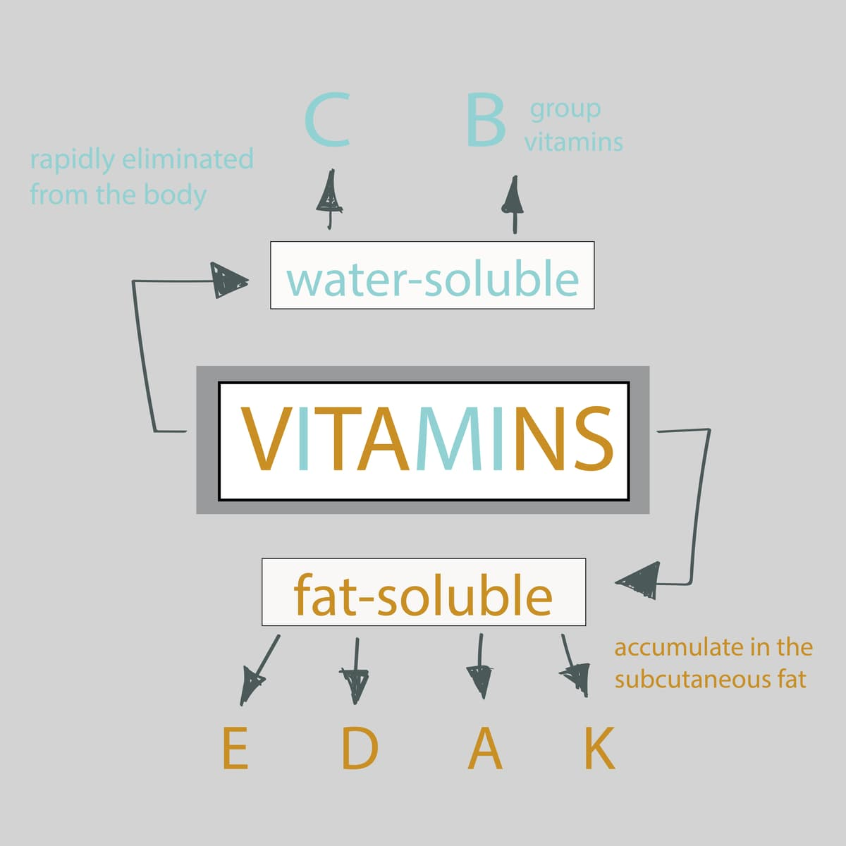 Types of Vitamins Infographic