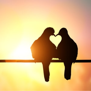 silhouette of birds making heart shape on pastel background