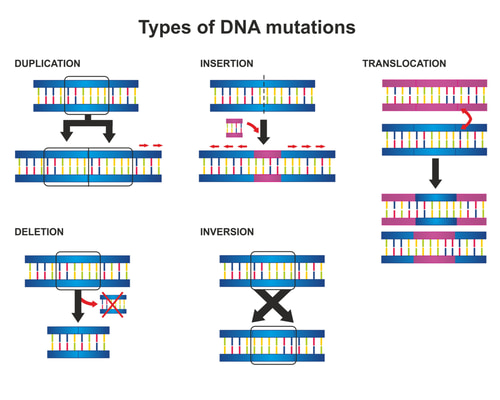 Types of DNA mutations are duplication, insertion, translocation, deletion and inversion