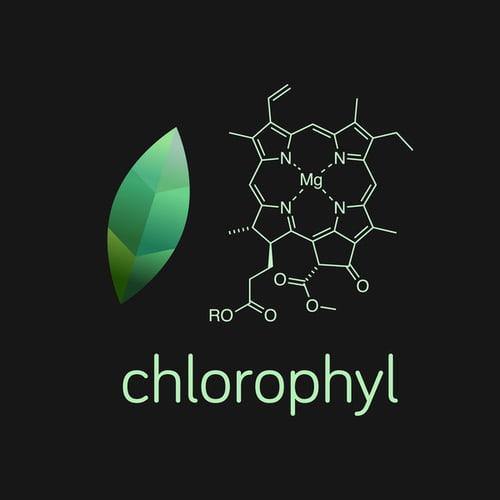 Vector illustration of green leaf and chlorophyll molecule.