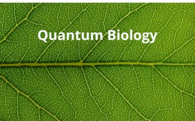 What is Quantum Biology?