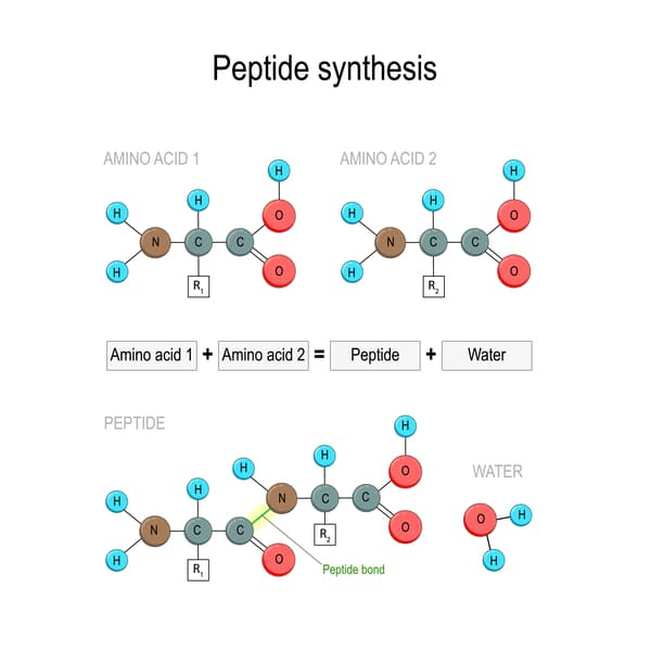 Peptides: Why Do We Need Them?