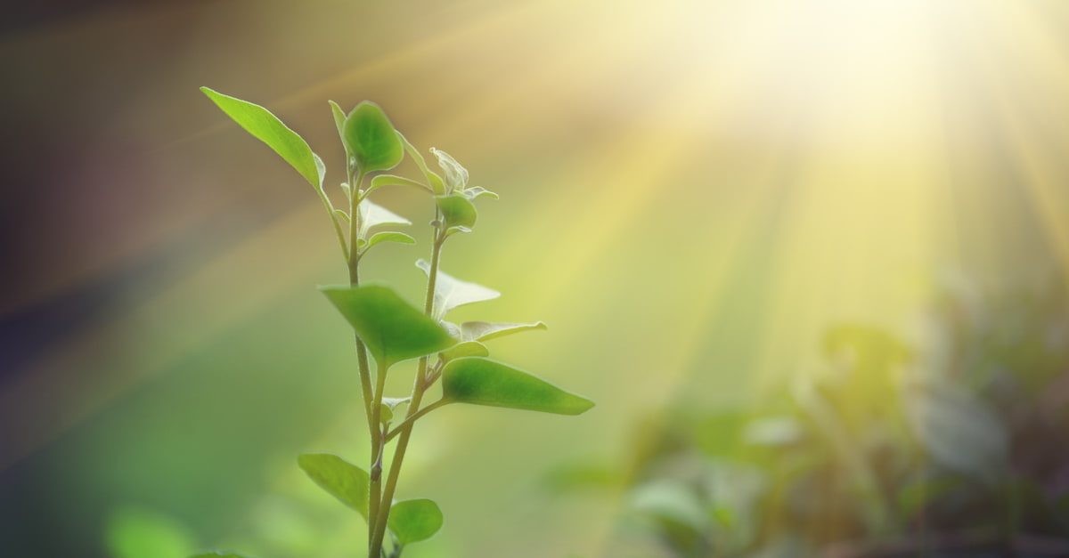 Light shining on a green sprout, sustainable energy