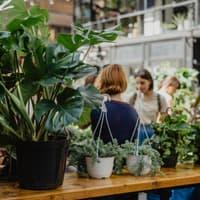 Indoor plants on sale on the plants market on the city street