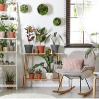 Choosing the right spot for your indoor plant health based on their needs