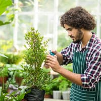 Side view of male gardener pruning potted indoor plants
