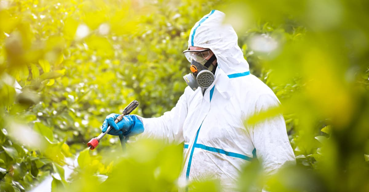 Farmer spraying fungicide chemicals while wearing protective suit and mask