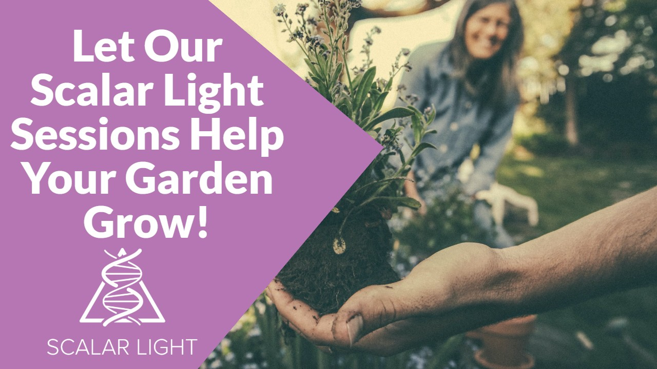 Let Our Scalar Light Sessions Help Your Garden Grow