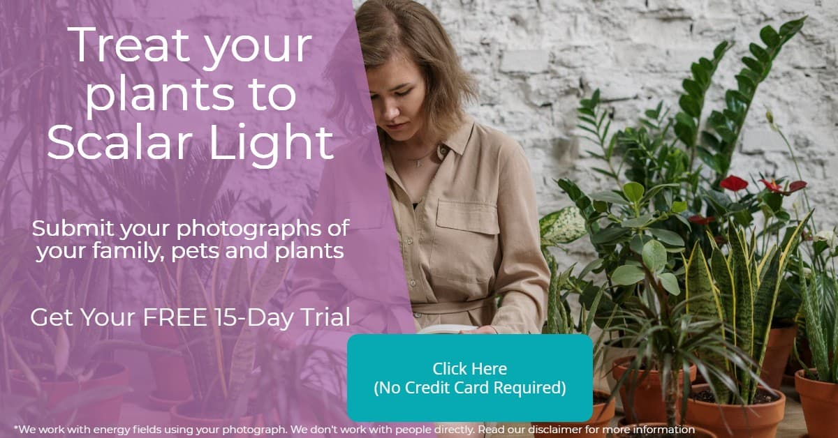 Trust your plants to Scalar Light