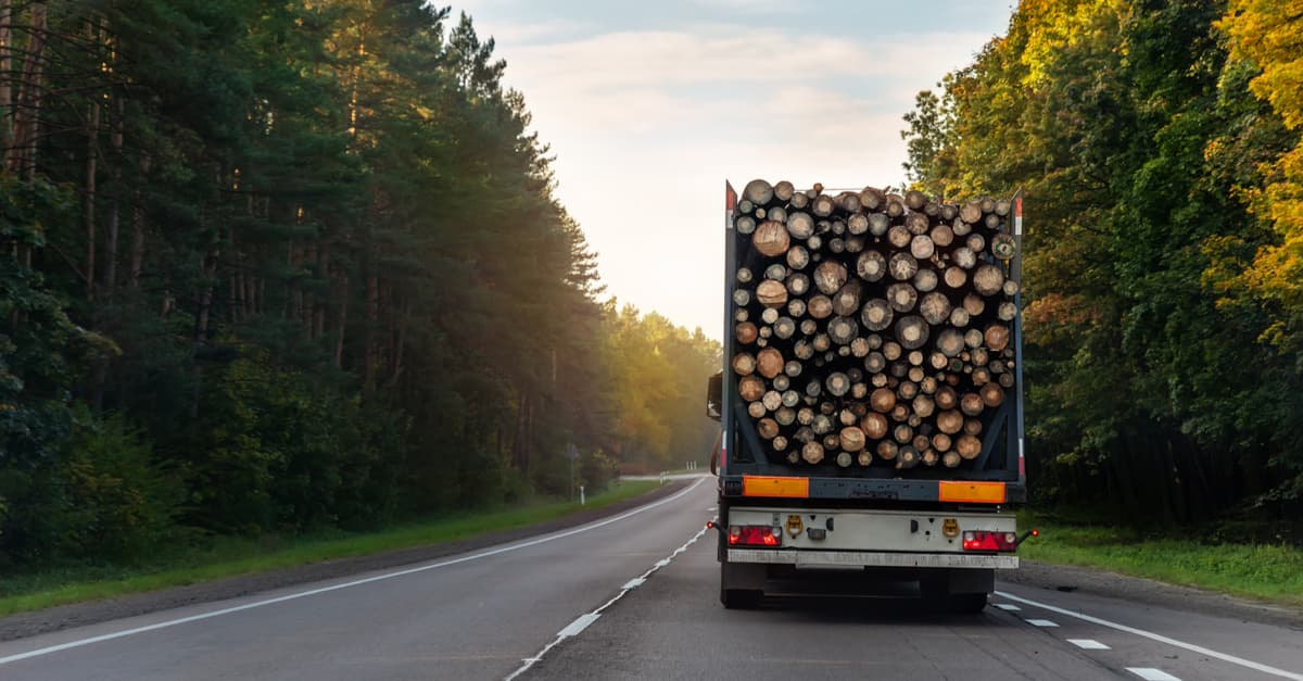A lorry transporting logs across the country, increasing the  possibilty of spreading diseases such as chestnut blight to unaffected areas