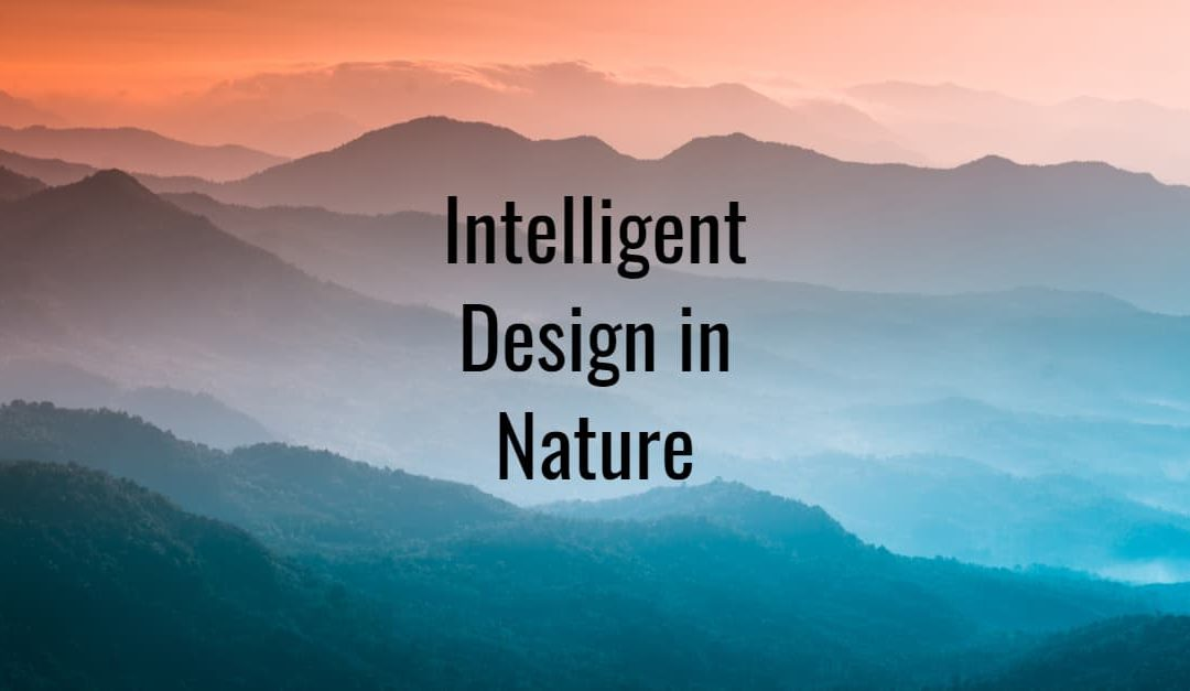 The words intelligent design in nature over a misty mountain background
