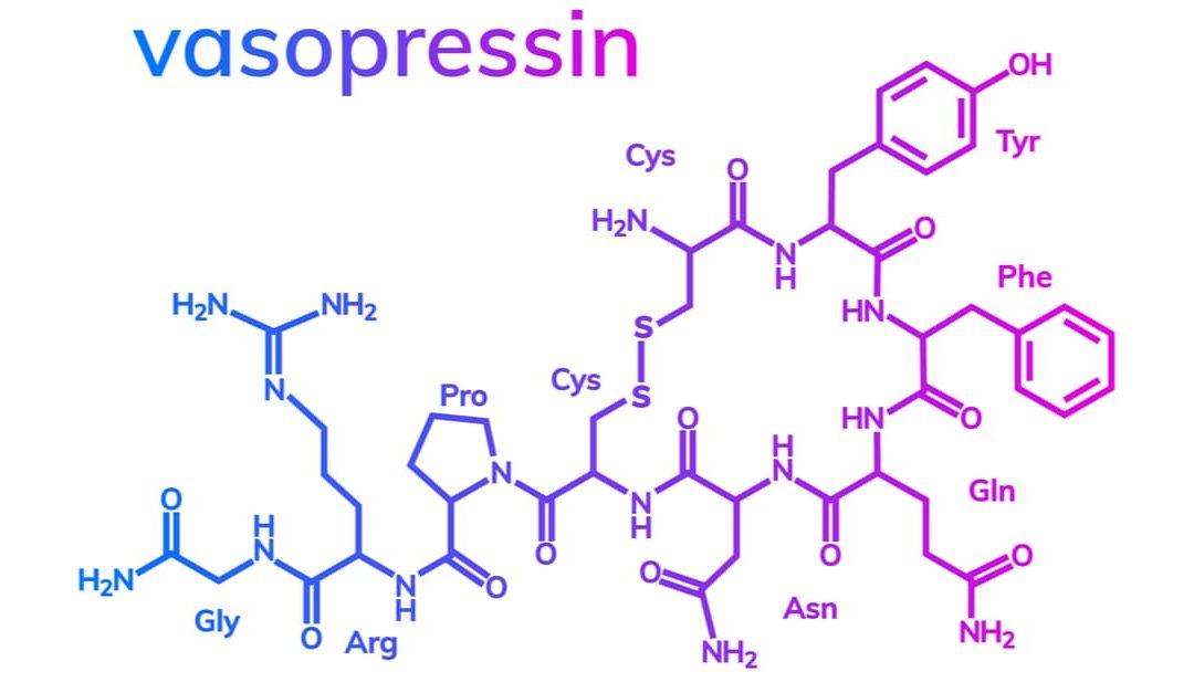 Vasopressin – Characteristics And Functions